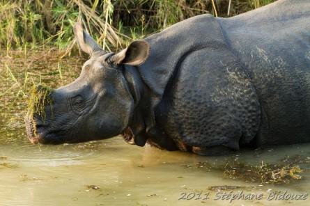 La réserve du Chitwan
