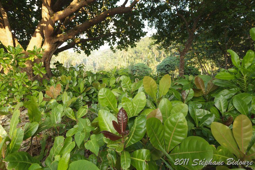 Thailande III_01335