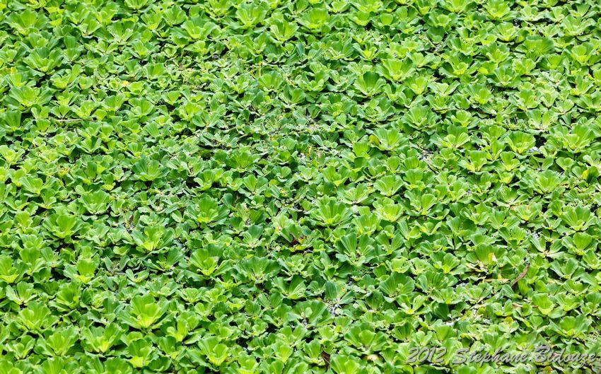floating plant background