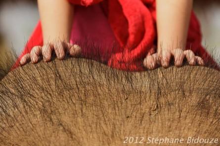 Sayaboury: les éléphants