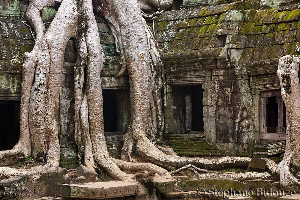 Angkor Ta Prohm temple