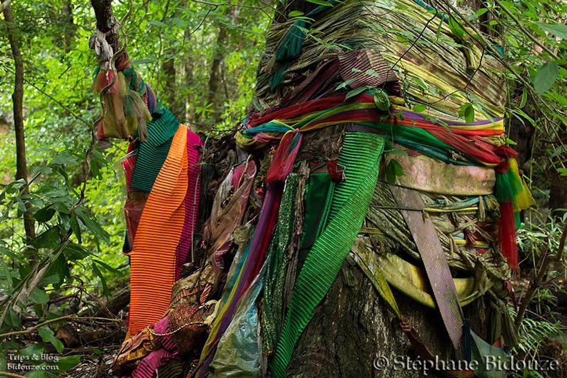 arbre-sacre-thailande-superstition