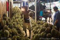 durian-uttaradit-fruit