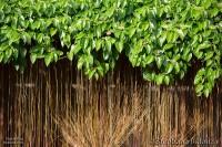 thai-garden-vines