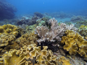 coraux-philippines-apnée-plongée