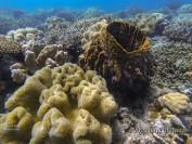 samal-ile-kaputian-snorkeling
