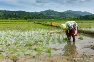 riz-plantation-palawan-philippines