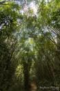 khao-sok-bambou-thailande