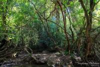 lianes-jungle-thailande