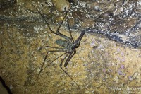 araignée-scorpion-solifuge