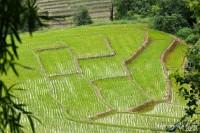 riz-terasse-chiang-mai-karen