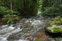 riviere-thailande-foret