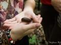 cloporte-geant-thailande
