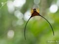 araignée-Gasteracantha-dalyi