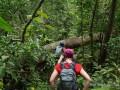 foret-khao-yai-thailande-jungle