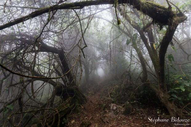 brume-brouillard-foret-chiang-dao