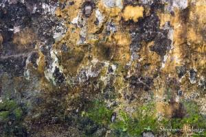 texture-mur-chaux-vietnam