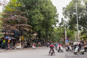mobylettes-arbres-hanoi