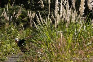 graminee-jungle-vietnam-grandes