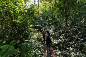 jungle-foret-cat-ba-parc-national-ile-vietnam