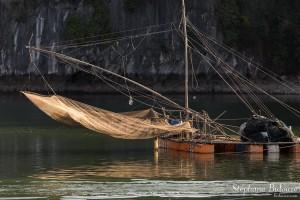 calamar-filet-pêche-vietnam
