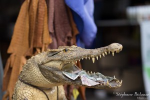 bangkok-crocodile-tete-argent-chatuchak