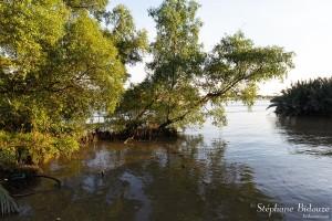 rive-arbre-chao-phraya-riviere