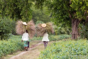 garminées-foin-fermière-birmanie