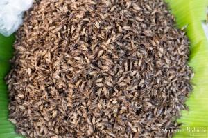 criquets-grillons-insectes-grillés-thailande