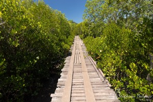 palatuviers-chemin-ponton-bois-thailande