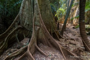 lagon-secret-ao-nang-ficus-arbre