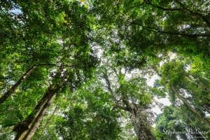 koh-kood-forêt