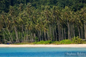 cocotier-thailande-mer-bleue-plage-koh-kood