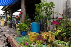 plantes-village-pecheur-thailande